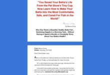 Photo of Betta Fish – Learn How to Give Your Betta a Great Life!