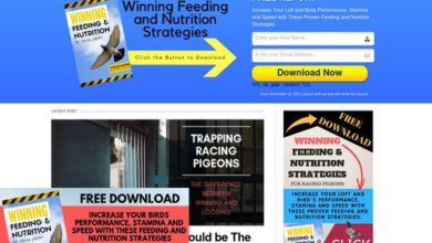 Photo of Pigeon Racing Master's Magazine — Pigeon Racing Master's Magazine